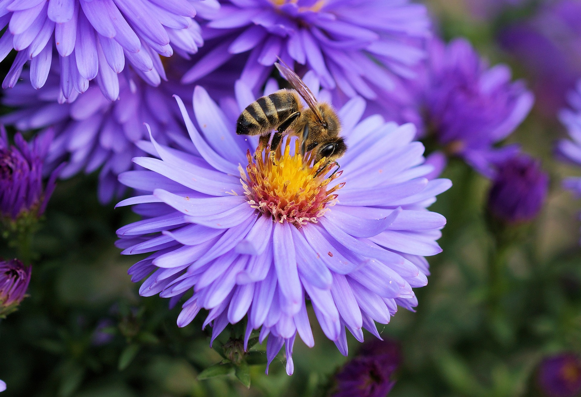 Busy Bees!